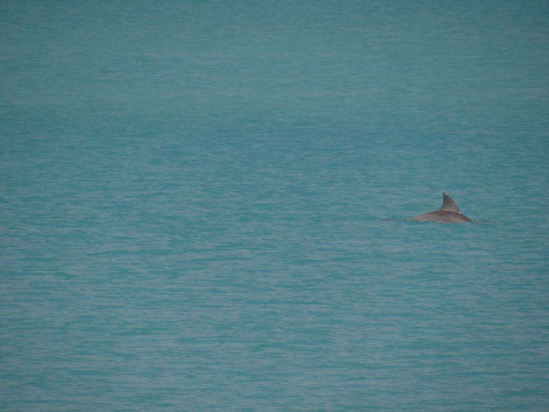 dolphins in front of our tent