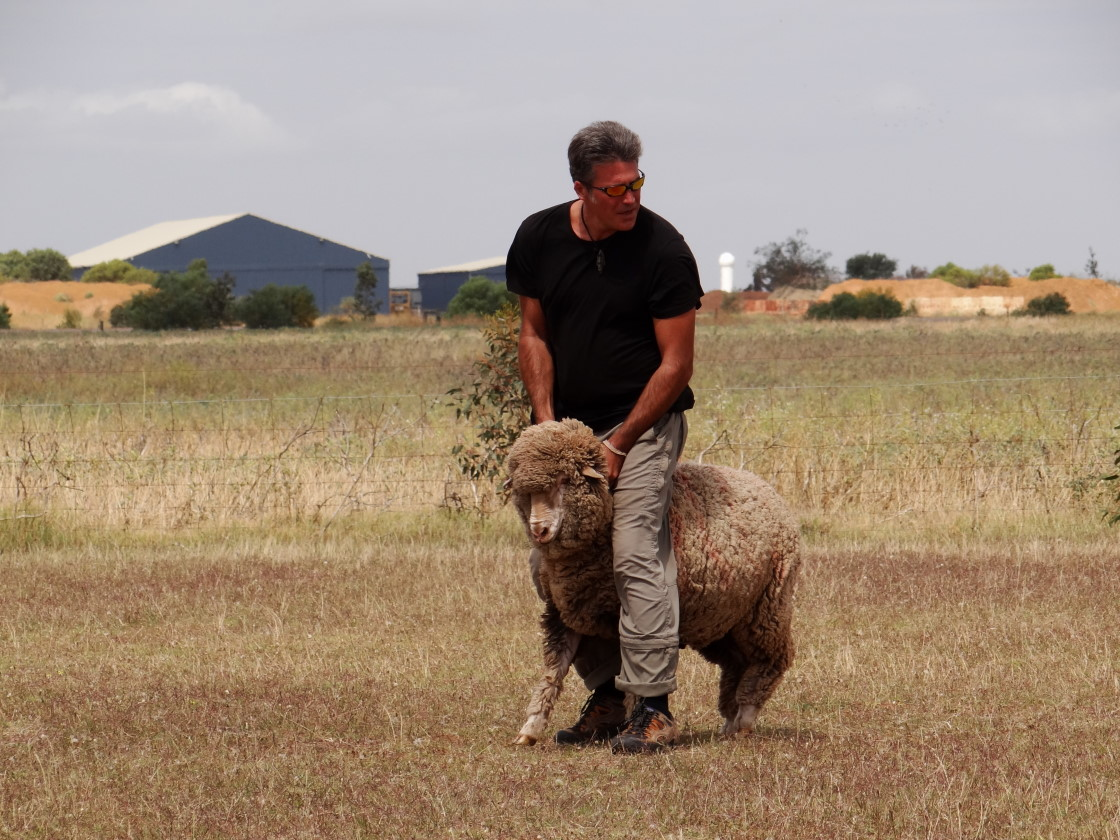 riding a sheep for a change ;-)