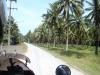 ... and palm tree plantation