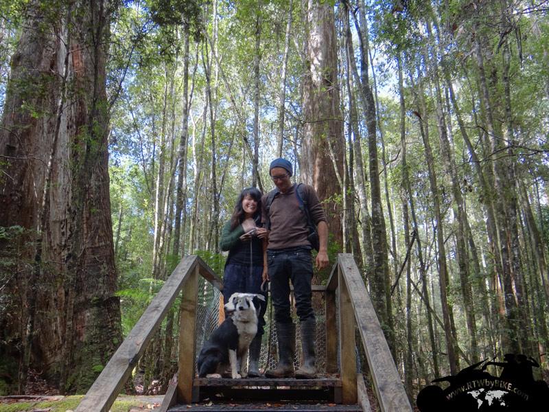 forest walk, Wen and Oscar