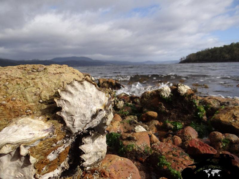 Oyster Rocks