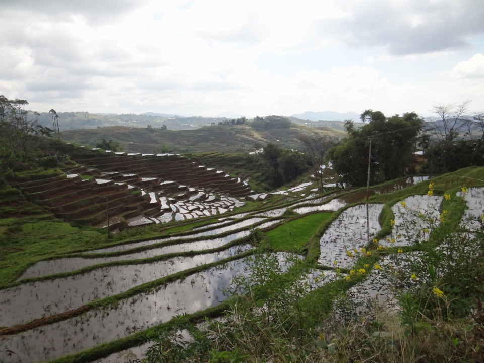 Flores -rice terraces close to Renung, on the road to Reo