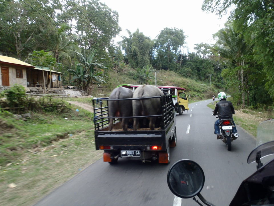 Flores -  on the road, Bajawa to Moni