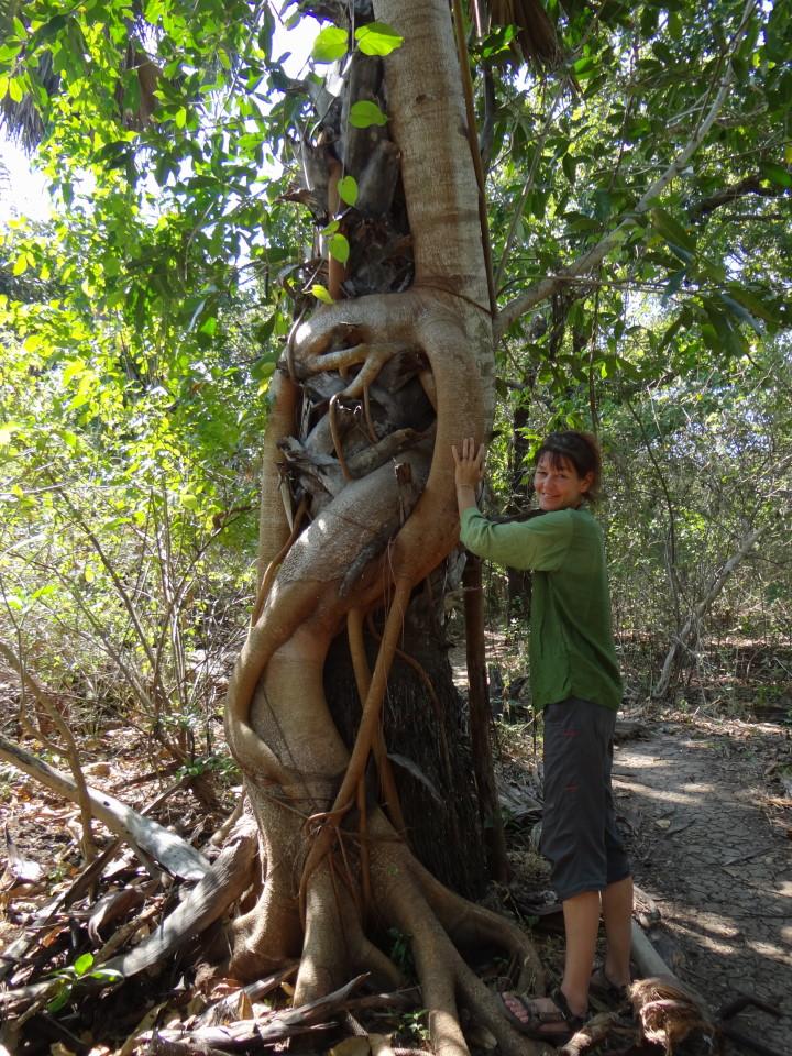 Flores - Rinca Island, meeting the dragons