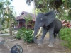 "Sumbawa - the dry island, ""wild elephants\"" ;-)"