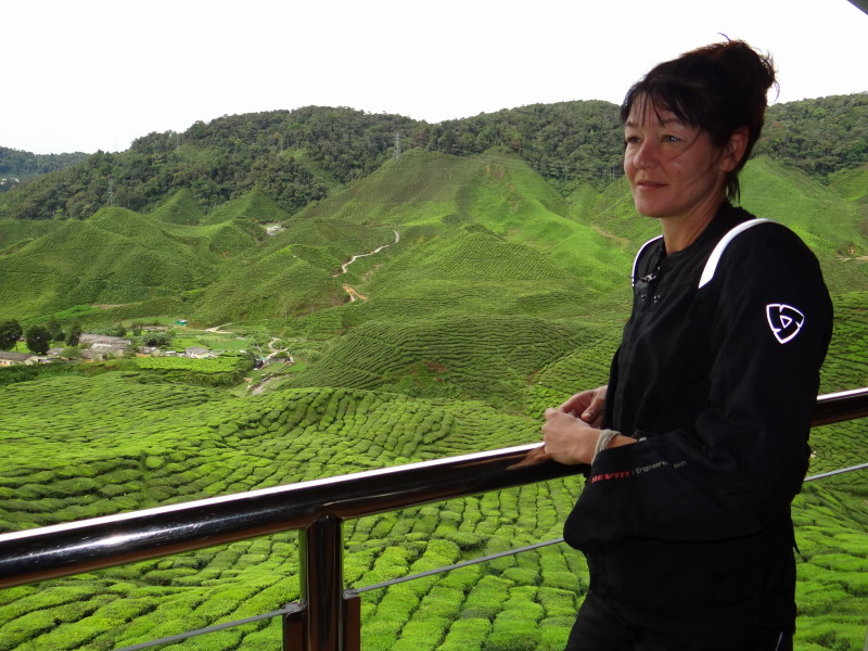 view on the tea plantations, Cameron Highlands