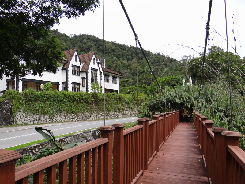 with a jungle bridge in front