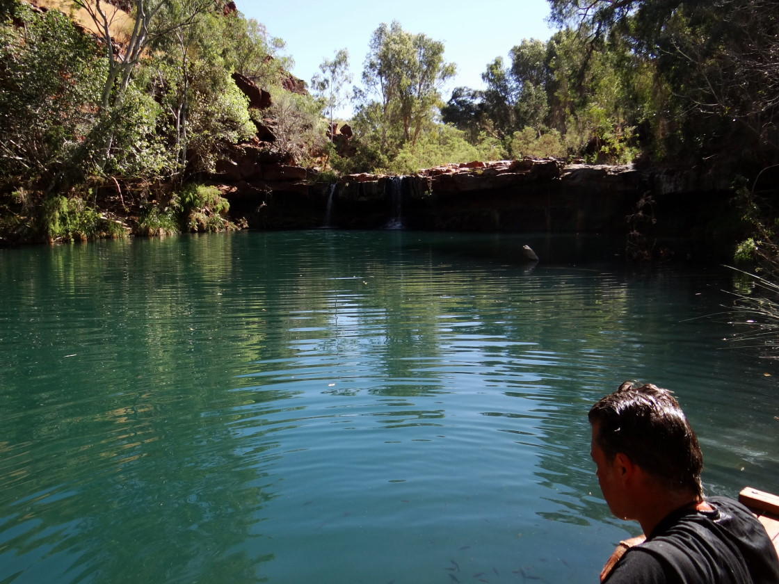Fern Pool, Dales Gorge,  Karijini