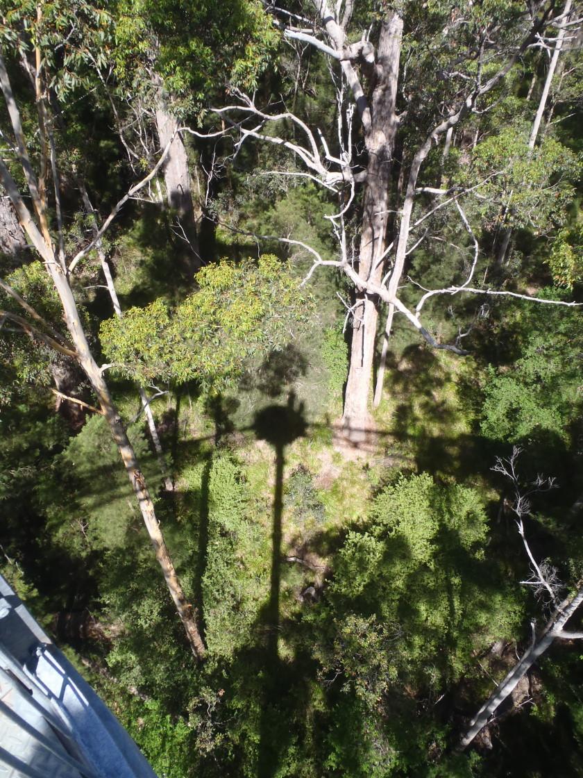 tree top walk - look down