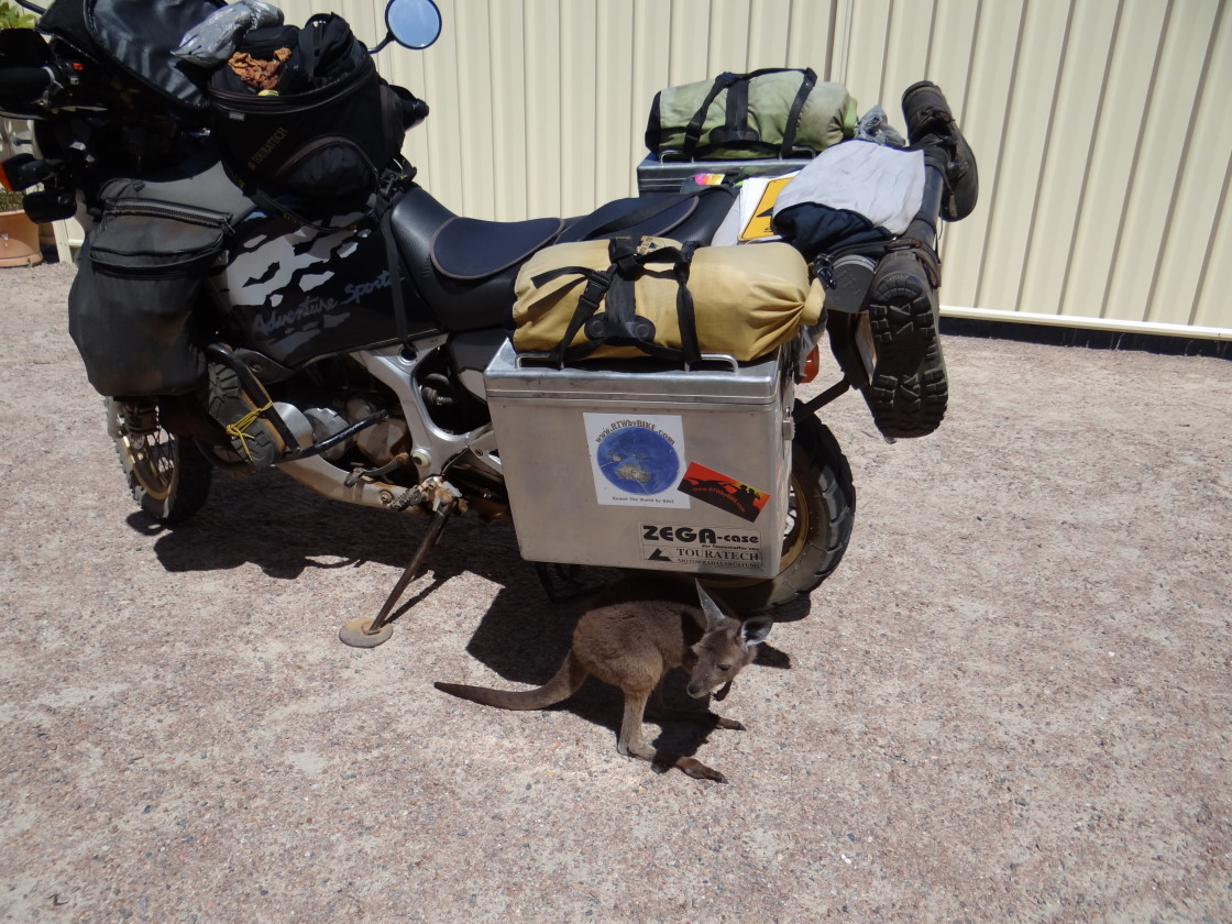 The `roo is inspecting our bike