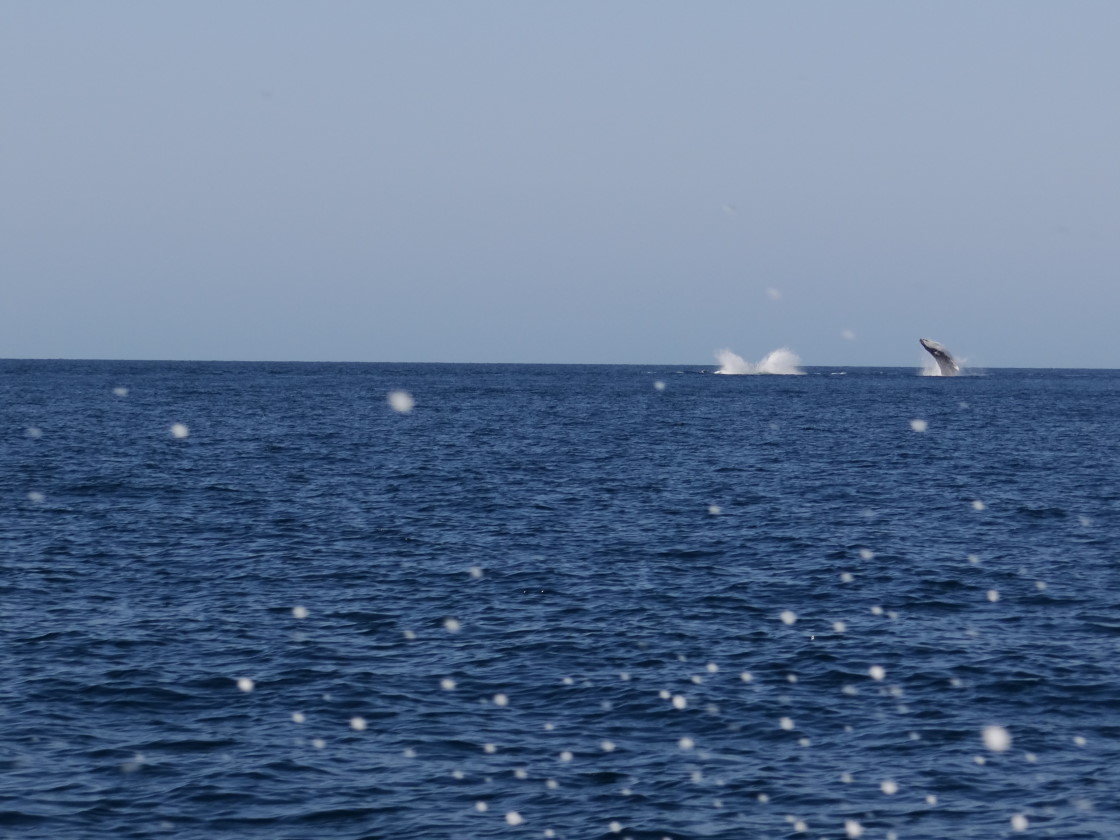 jumping whales