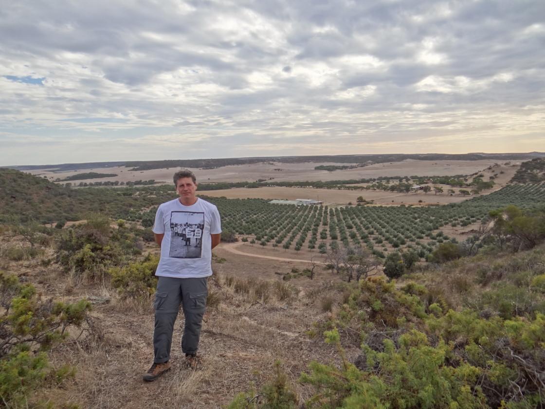 farm walk - over the olive trees