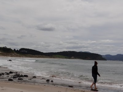 Tawharanui Regional Park, beach