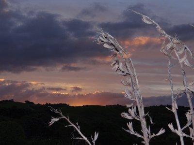 Tawharanui Regional Park, sunset