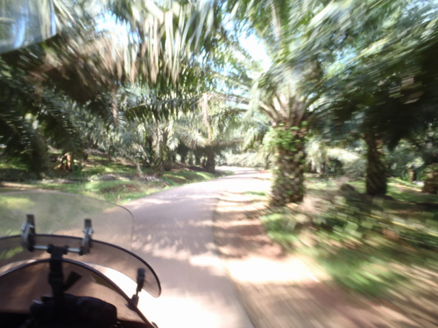 still driving throught palm tree plantations
