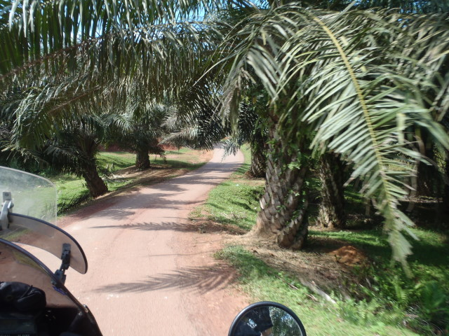 ....palm tree plantations...