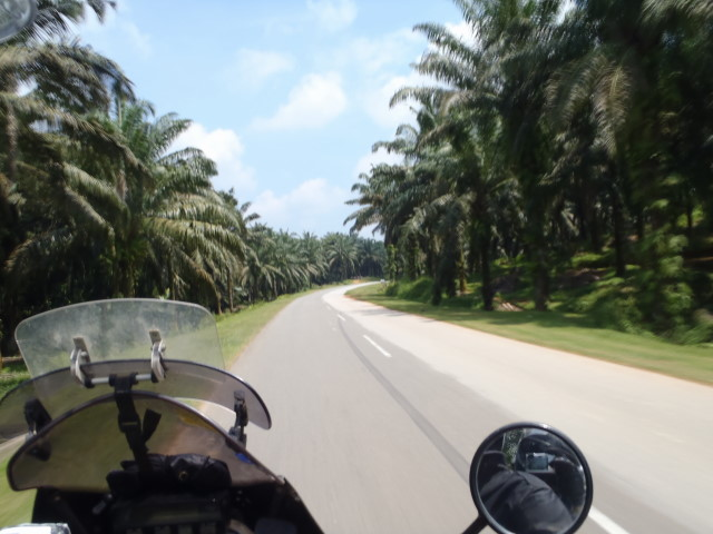 palm tree plantations