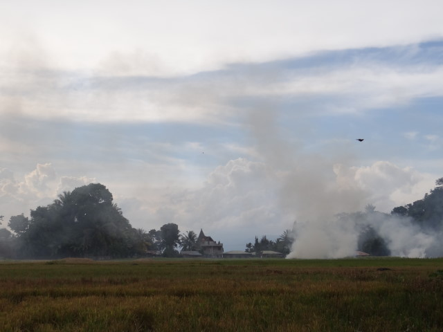 after the rice harvest - burning fields
