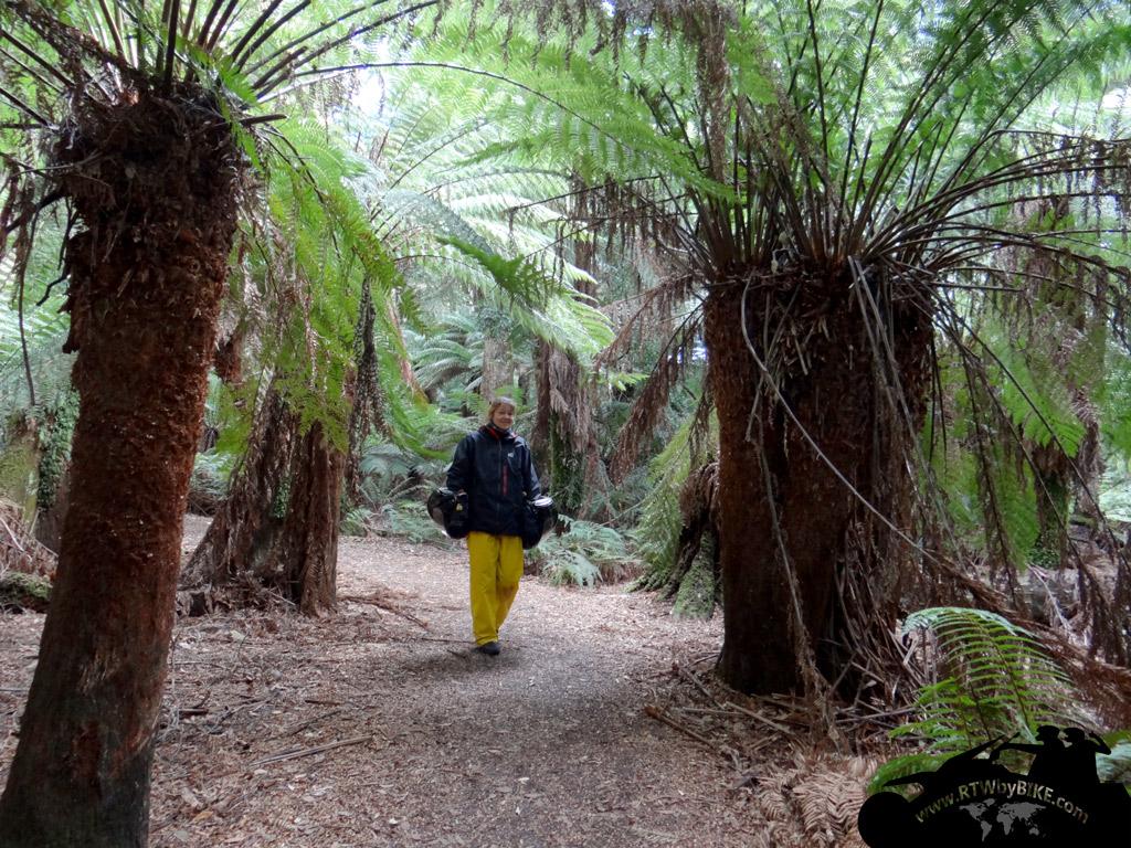 Plam trees