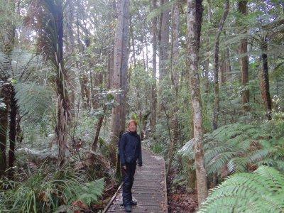 Kauri Forest walk
