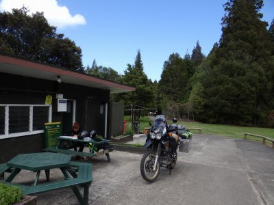 kauri forest camp site