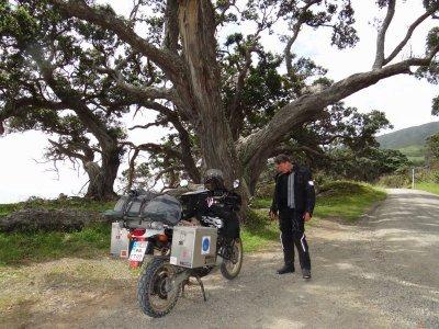 Coromandel, impressiv trees