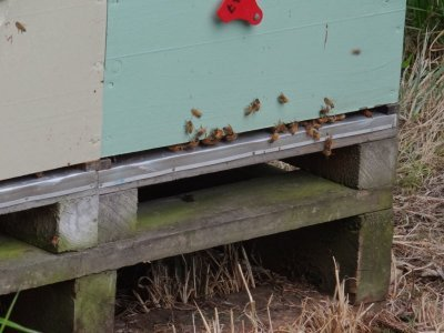 the bees are doing a good job