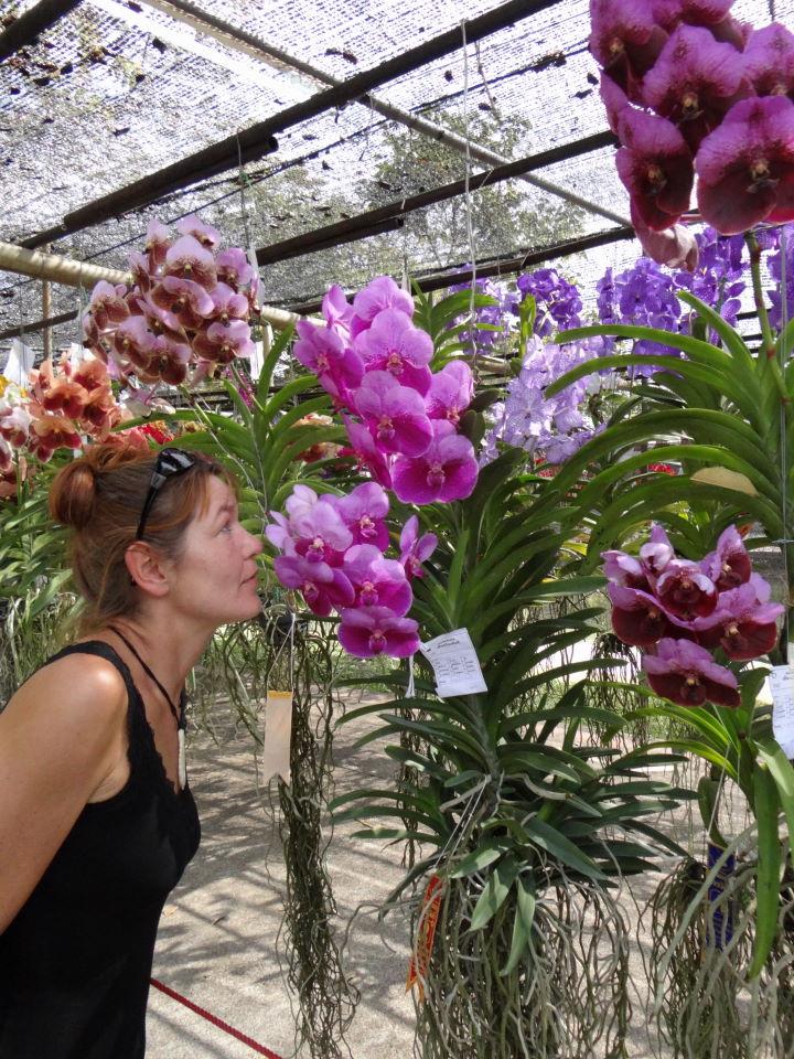 Chiang Mai , Flower Festival