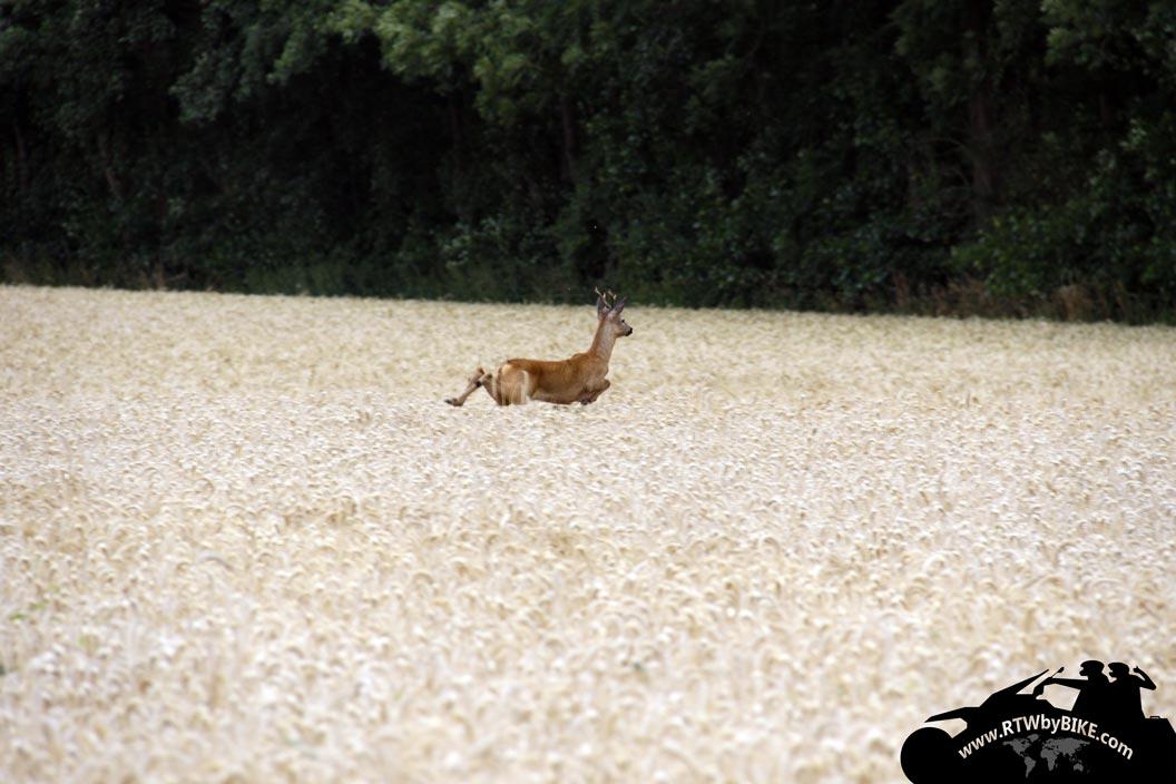 deer, Jägerhaus
