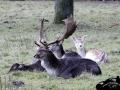 deer next door in Hamburg