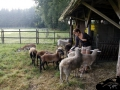 cheep feeding time