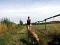 dog walking...