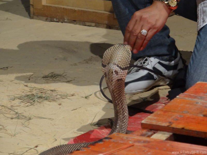 cobra charmer, Ban Phen