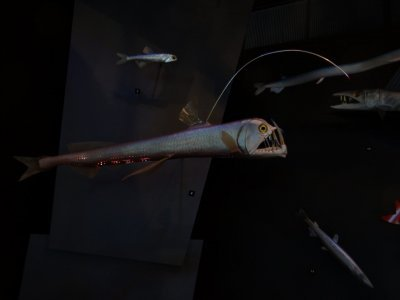 deepwater-fish
