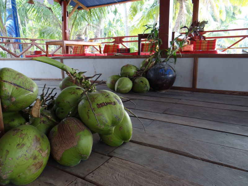 coconuts, Don Khon, Four Thousand Islands
